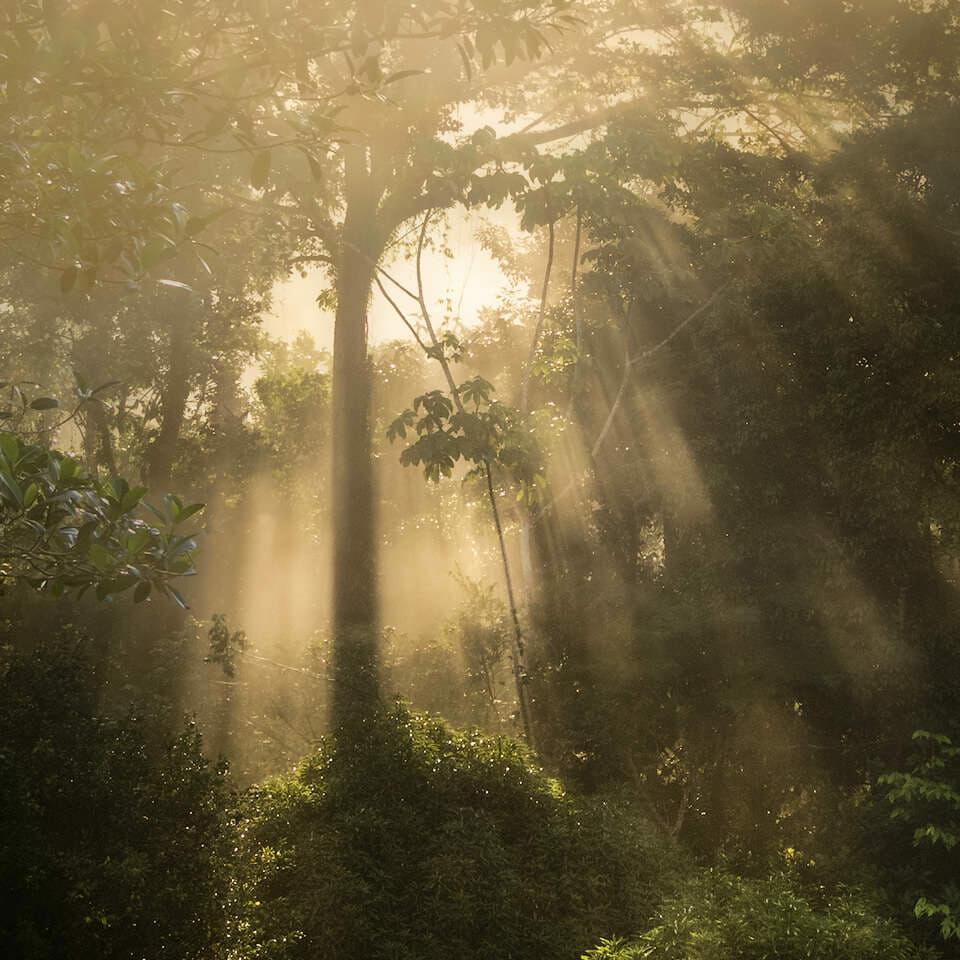 Light filtering through rainforest vegetation.